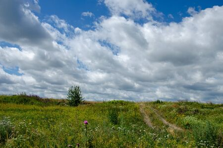 summer rural landscape with a blossoming meadow, road and clouds