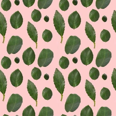 Seamless texture of green leaves on a pink background.