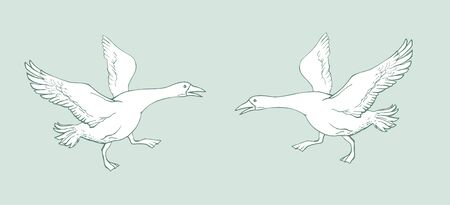 Vector image of two geese running towards each other with outstretched wings on a light blue background. Zdjęcie Seryjne