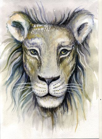 Watercolor drawing close-up of a white lion. Stok Fotoğraf