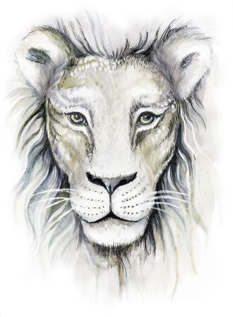 Watercolor drawing close-up of a white lion