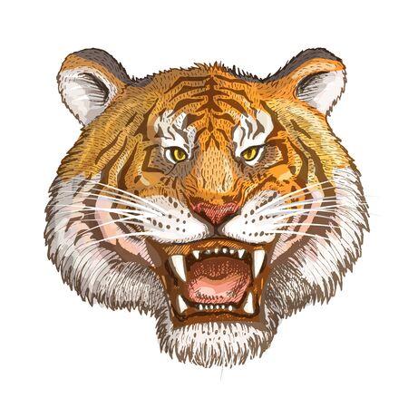 Vector image of a tiger face closeup on a white background. Ilustração