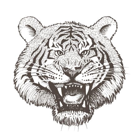 Vector image of a growling head of a white tiger on a white background.