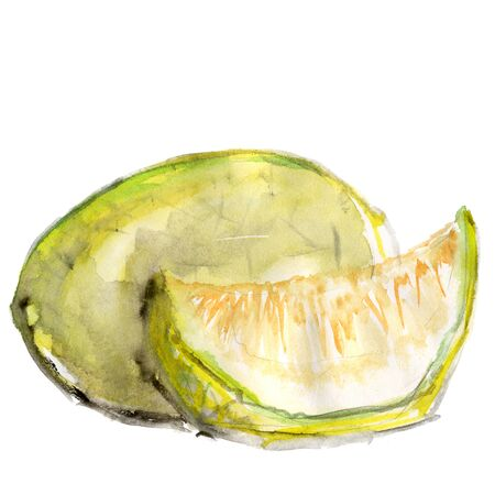 Watercolor drawing of a bright yellow-green melon and its slices Isolated on a white background