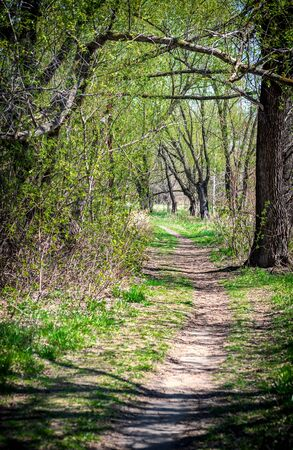 Photo of a summer path among trees.