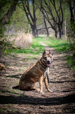 Photo of a tiger dog surrounded by trees in summer. Banco de Imagens