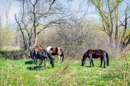 Photo of four horses in the summer on green grass
