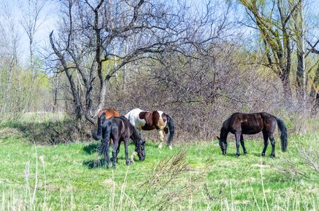 Photo of four horses in the summer