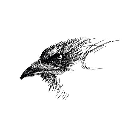 Vector image of a raven head isolated on white background. Ilustração