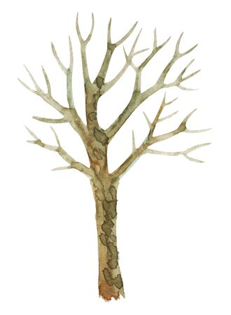 Watercolor drawing of a tree without leaves. Isolated on white background.