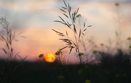 Photo of sunset and spikelets. Blurred background for wallpaper Banco de Imagens