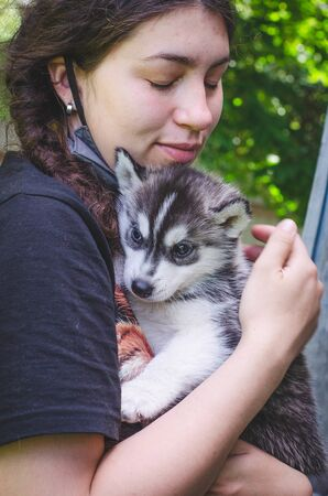 Black and white husky puppy in the arms of a girl Banco de Imagens