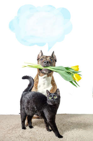 A large dog with a bouquet of yellow tulips in its teeth and a small black cat.