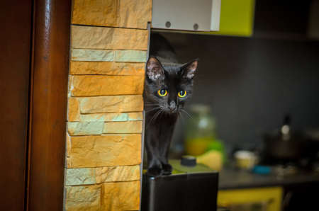 Black cat with yellow eues sitting on the coffee machine in the kitchen
