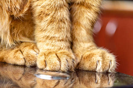 close up of cute red cat paws at home. Фото со стока
