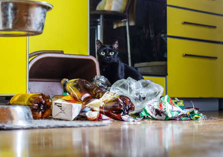 An overturned garbage can and a pile of garbage in the kitchen against the backdrop of a yellow kitchen set. Фото со стока