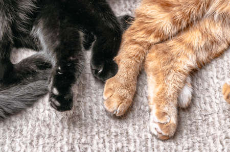 two cute cats lying and relaxing at home, Фото со стока