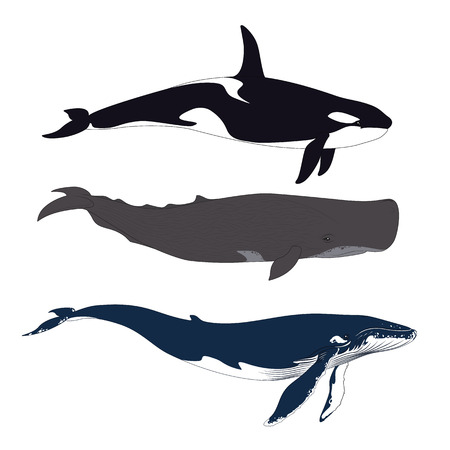 Set of Whales in Simple Realistic Style. Vector.