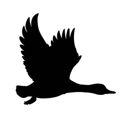 Wild Duck flying. Drake. Vector illustration of black silhouette of bird Mallard isolated on a white background for your design. Duck hunting. Shape. Stock Illustratie