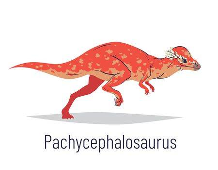 Pachycephalosaurus. Ornithischian dinosaur. Colorful vector illustration of prehistoric creature pachycephalosaurus in hand drawn flat style isolated on white background. Huge fossil dinosaur.