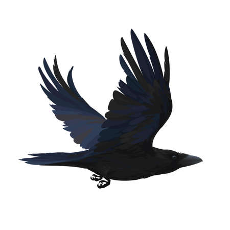 Colorful vector illustration of smart bird Corvus Corax in hand drawn realistic style isolated on white background. Realistic raven flying. Element for your design, print, decoration.
