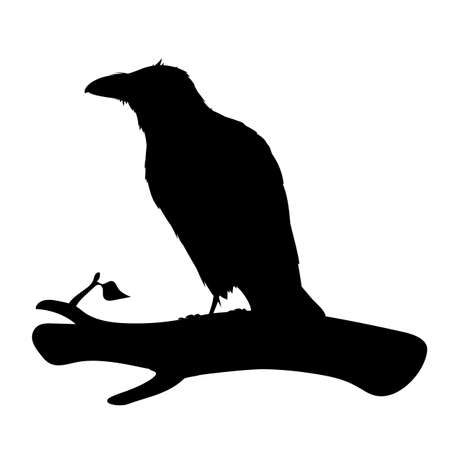 Realistic raven sitting on a branch. Stencil. Monochrome vector illustration of black silhouette of smart bird Corvus Corax isolated on white background. Element for your design, print, decoration. 向量圖像