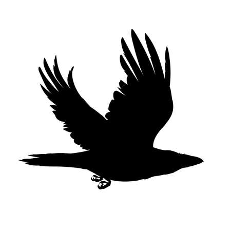 Monochrome vector illustration of black silhouette of smart bird Corvus Corax isolated on white background. Realistic raven flying. Element for your design, print, decoration. Stencil.