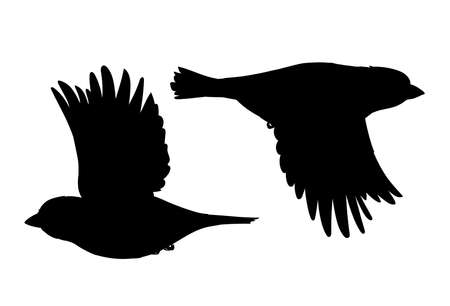 Realistic sparrows flying. Monochrome vector illustration of black silhouettes of little birds sparrows isolated on white background. Stencil. Element for your design, print, decoration.