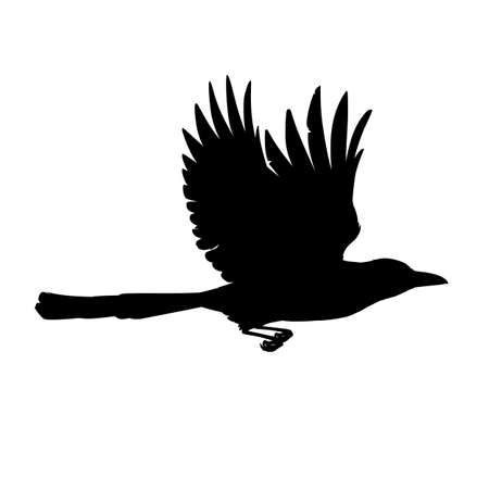 Monochrome vector illustration of black silhouette of intelligent bird Eurasian Magpie isolated on white background. Realistic magpie flying. Element for your design, print, decoration. Stencil. 向量圖像