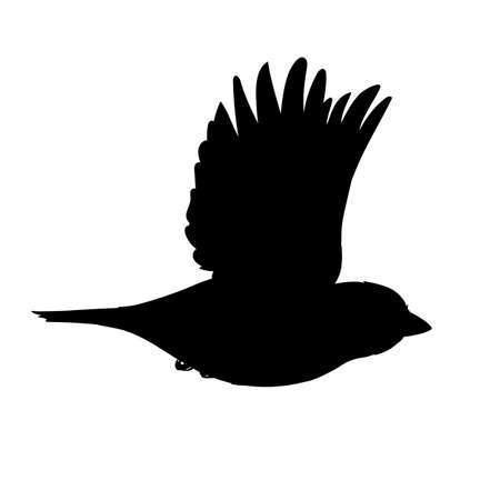 Realistic sparrow flying. Monochrome vector illustration of black silhouette of little bird sparrow isolated on white background. Stencil. Element for your design, print, decoration.
