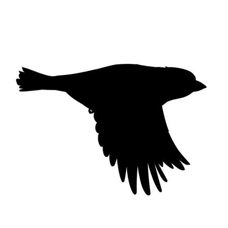 Realistic sparrow flying. Stencil. Monochrome vector illustration of black silhouette of little bird sparrow isolated on white background. Element for your design, print, decoration.