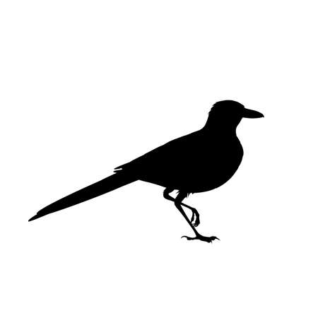 Realistic magpie sitting. Monochrome vector illustration of black silhouette of intelligent bird Eurasian Magpie isolated on white background. Element for your design, print, decoration. Stencil. 向量圖像