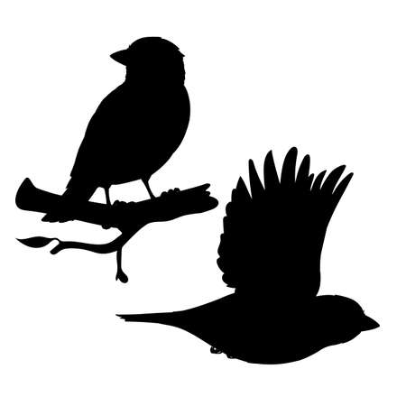 Realistic sparrows sitting and flying. Monochrome vector illustration of black silhouettes of little birds sparrows isolated on white background. Stencil. Element for your design, print, decoration. 向量圖像