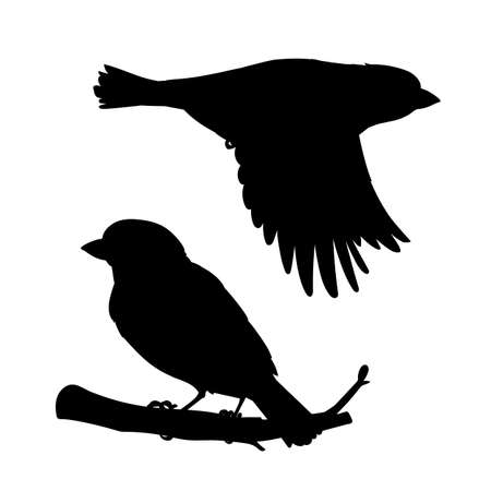 Realistic sparrows sitting and flying. Stencil. Monochrome vector illustration of black silhouettes of little birds sparrows isolated on white background. Element for your design, print, decoration. 向量圖像