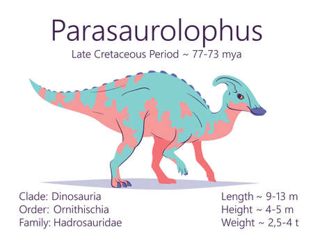 Parasaurolophus. Ornithischian dinosaur. Colorful vector illustration of prehistoric creature parasaurolophus and description of characteristics and period of life isolated on white background. Dino.
