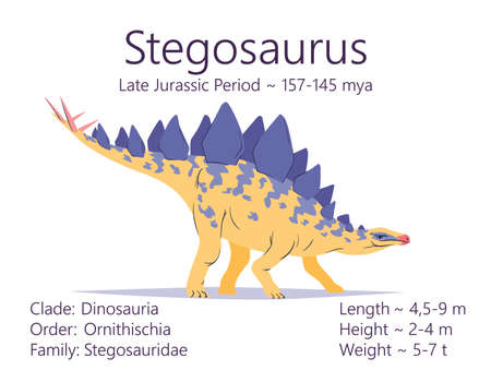 Stegosaurus. Ornithischian dinosaur. Colorful vector illustration of prehistoric creature stegosaurus and description of characteristics and period of life isolated on white background. Fossil dino.