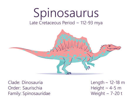 Spinosaurus. Theropoda dinosaur. Colorful vector illustration of prehistoric creature spinosaurus and description of characteristics and period of life isolated on white background. Fossil dino.