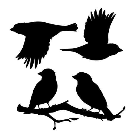 Set of realistic sparrows sitting and flying. Monochrome vector illustration of black silhouettes of little birds sparrows isolated on white background. Stencil. Element for your design, print. 向量圖像