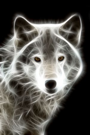 white wolf: Illustration of white wolf