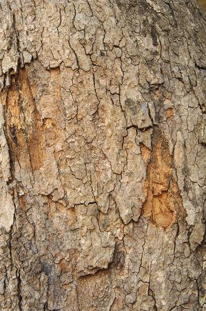 wood railroads: The tree bark of hard wood background texture