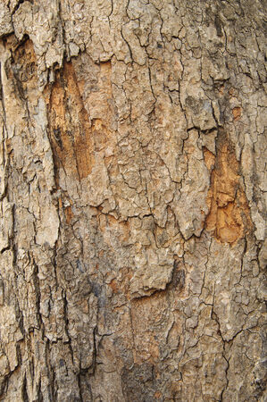 wood railroad: The tree bark of hard wood background texture