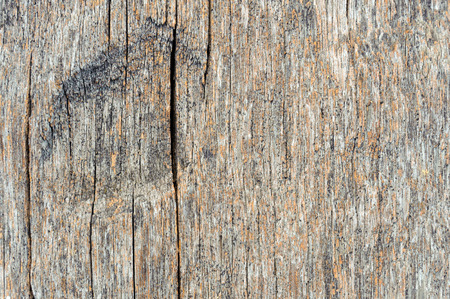 decompose: texture of bark wood use as natural background