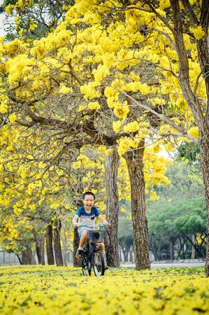 yellow flower tree: Boy ride bicycle in a park with yellow flower tree