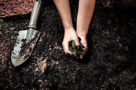 sembrando un arbol: Cruzamiento de la plántula y el suelo en la mano del niño Foto de archivo