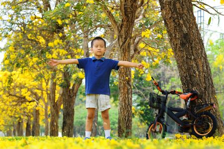yellow flower tree: Boy relax in park and yellow flower tree with bicycle