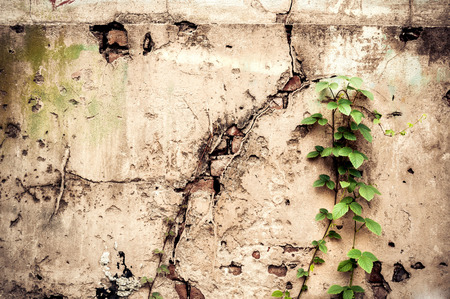 Little plant grow on old red brick wall texture photo
