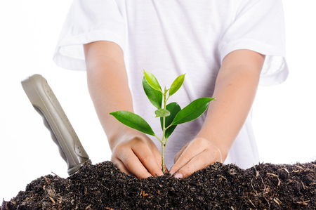 Boy planting young plant into the soil on white background photo