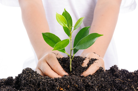 Boy planting young plant into the soil on white background