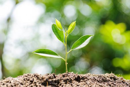 若い植物緑ボケ背景と土壌に生育