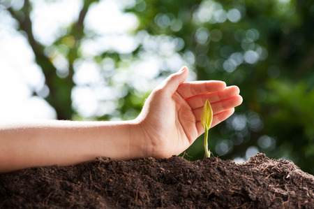 germinate: Hand protect Young germinate seedling from ground